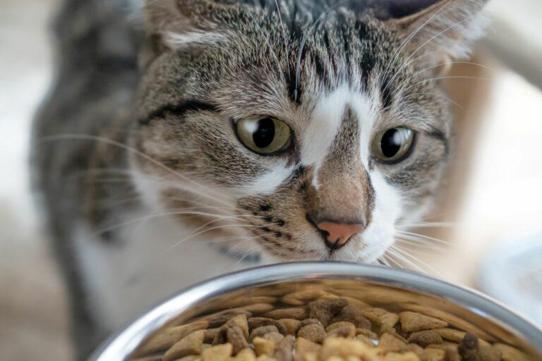eledelmennyiség macskáknak