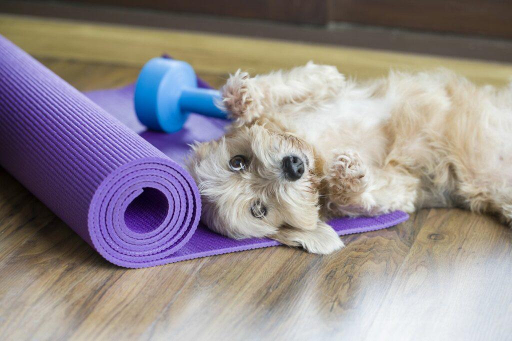 Hund mit Fitnessgeräten