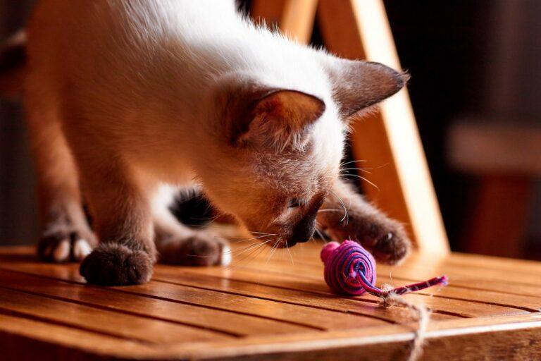macska játékegér