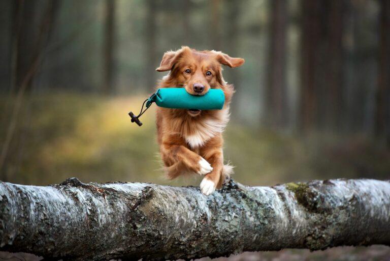 mozgás kutyával