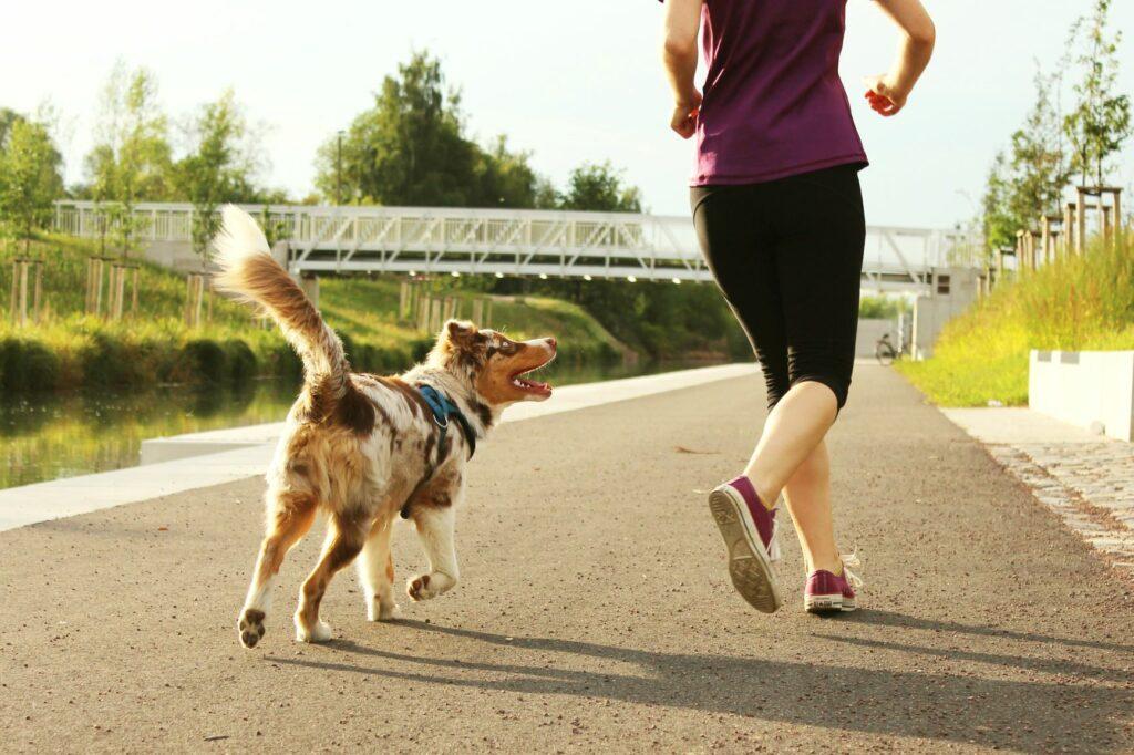 Joggen mit Hund ohne Leine