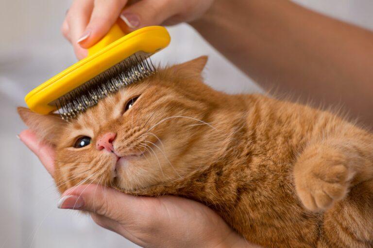 macska szőrápolás