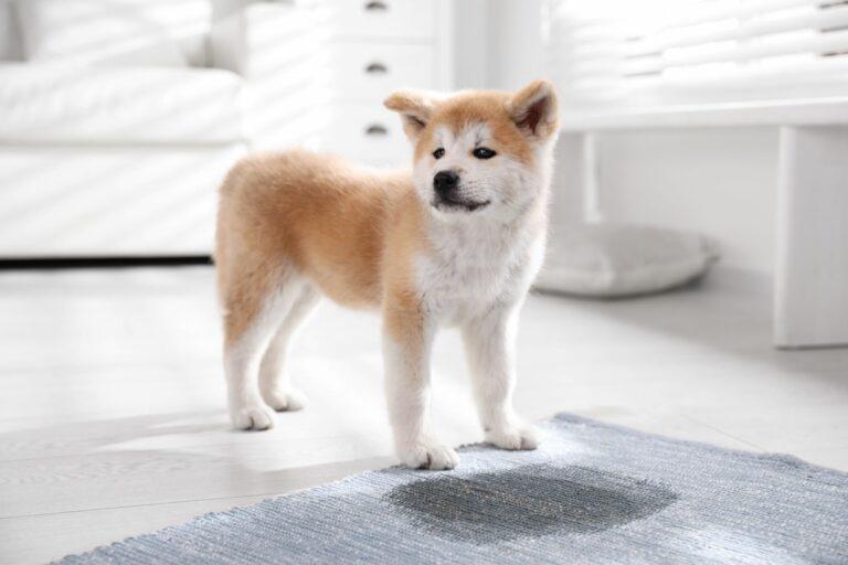 Kutya szobatisztaságra nevelés