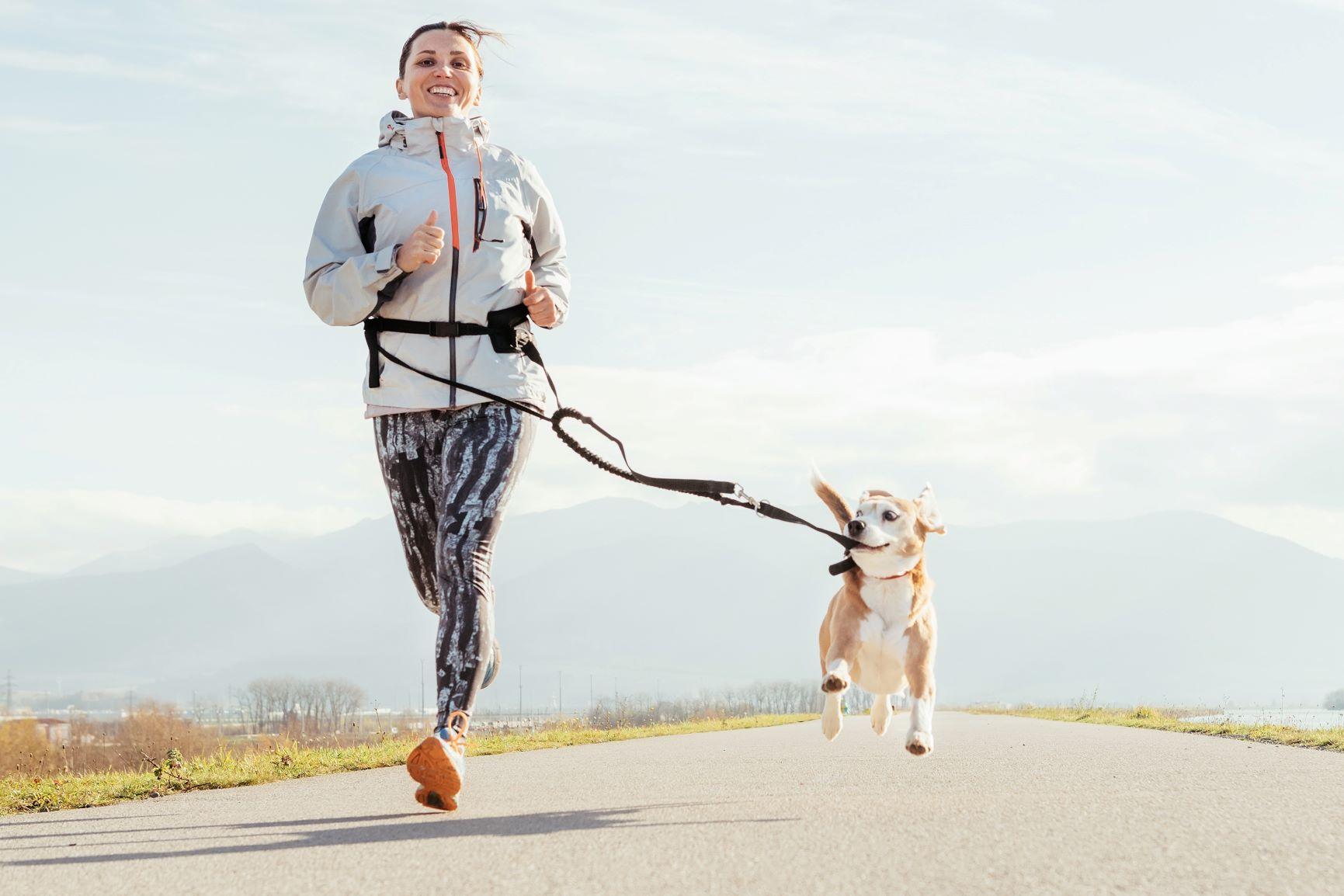 kutyas futas