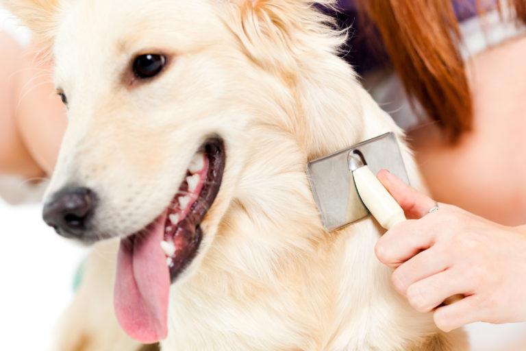 kutya ápolás