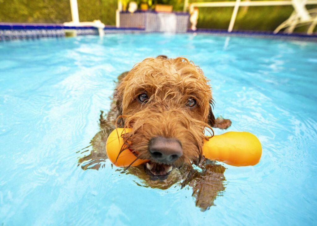 kutya a medencében