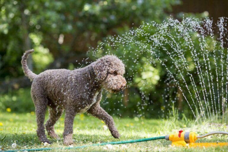 kutyák hűsítése