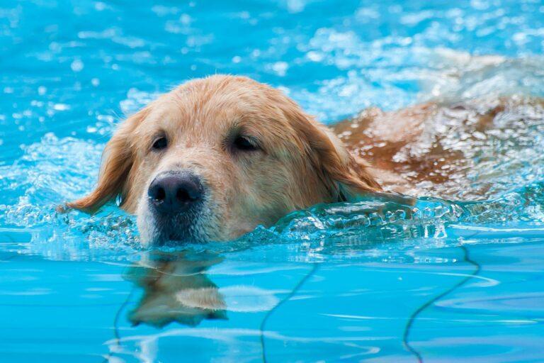 úszó kutya
