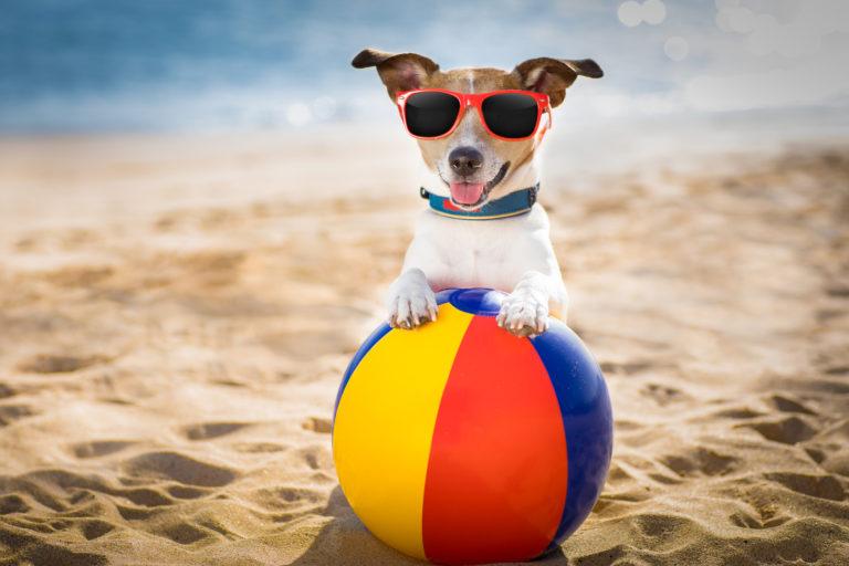 kutyafelszerelés a nyárra