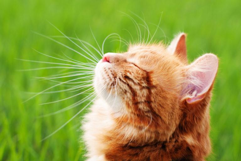 napozó macska