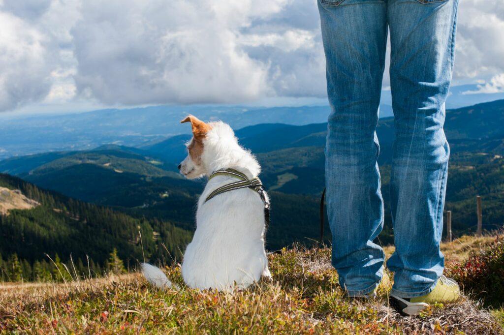 erdei kirándulás kutyával