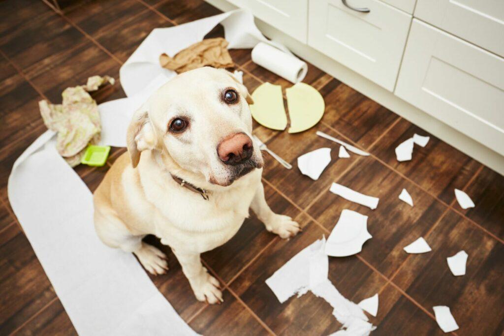 szorongó kutya