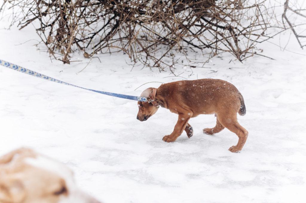 félős kutya a sétán