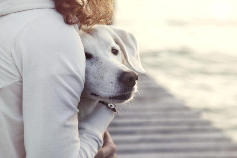 félős kutya