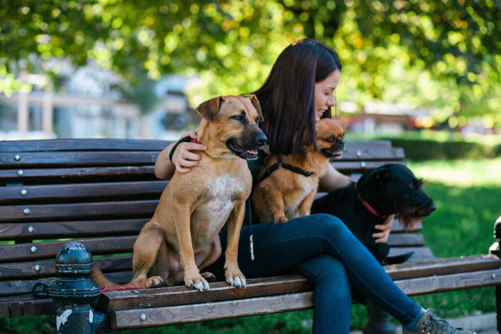kutyaszitter