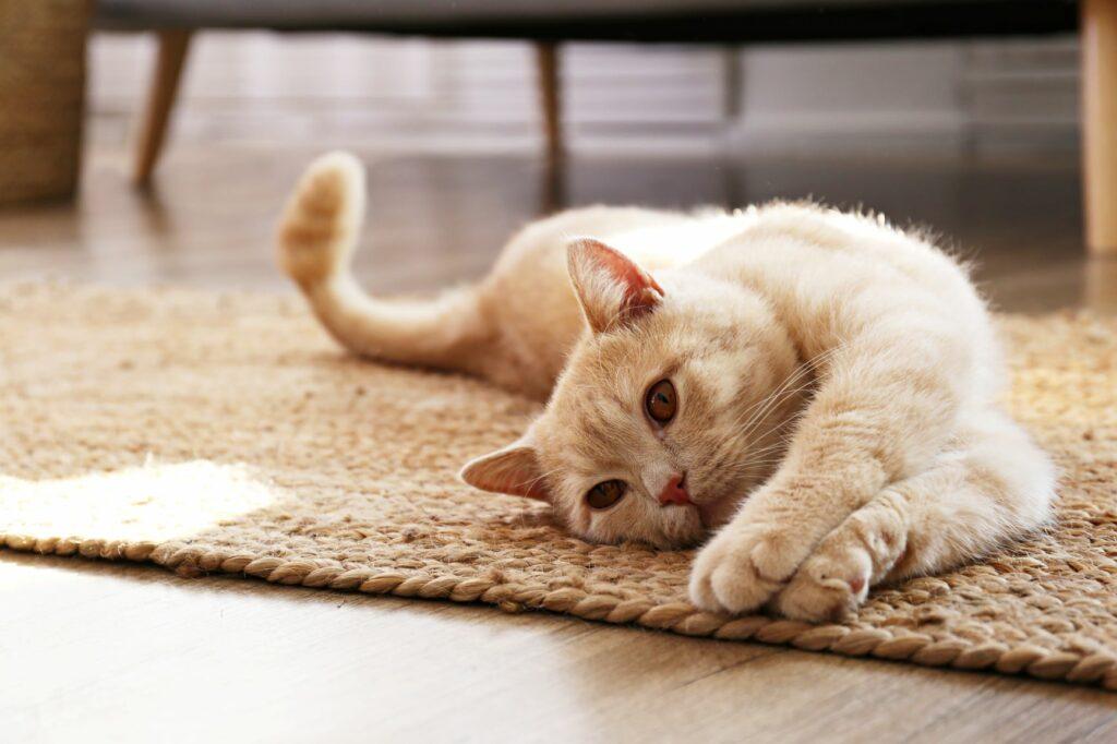 macskával a covid után