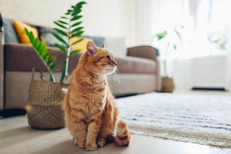 macska egyedül otthon a koronavírus után